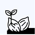Feminized Hemp Seeds